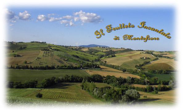 Azienda Agraria   Laureti Domenico